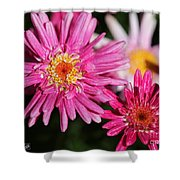 Marguerite Daisy Named Summer Song Rose Shower Curtain