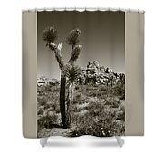 Joshua Tree National Park Landscape No 3 In Sepia Shower Curtain