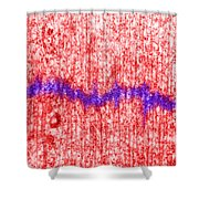 Mitotic Spindle Tem Shower Curtain