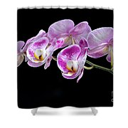 Moon's Orchid  Shower Curtain