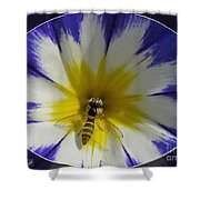 Morning Glory Named Royal Ensign Shower Curtain