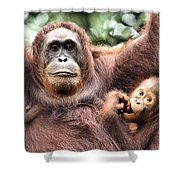 Mother And Baby Orangutan Borneo Shower Curtain