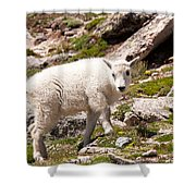 Mountain Goat Kid On Mount Evans Shower Curtain
