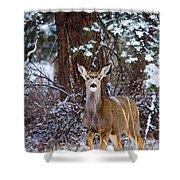 Mule Deer In Snow Shower Curtain
