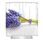 Muscari Or Grape Hyacinth Shower Curtain