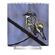 Myrtle Warbler Shower Curtain