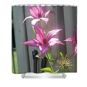 3 Of A Kind   # Shower Curtain