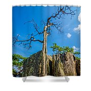 Old And Ancient Dry Tree On Top Of Mountain Shower Curtain