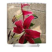 Orienpet Lily Named Scarlet Delight Shower Curtain