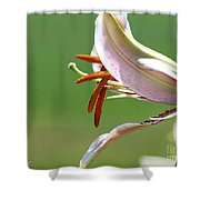 Oriental Lily Named Tiger Edition Shower Curtain