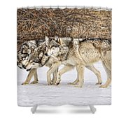 3 Pack Shower Curtain