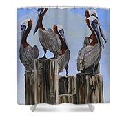 Pelicans Five Shower Curtain
