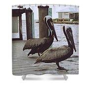 Pelicans Shower Curtain
