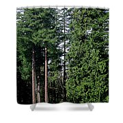 Picnic With The Giants Shower Curtain