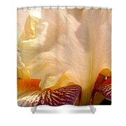 Pink And Purple Iris 2 Shower Curtain