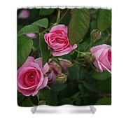 3 Pink Roses Shower Curtain