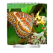 Plain Tiger Butterfly Shower Curtain