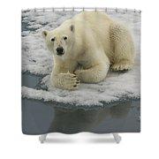 Polar Bear Resting On Ice Shower Curtain
