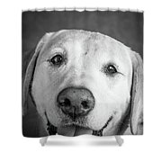Portrait Of A Boxer Dog And Golden Shower Curtain