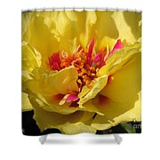 Portulaca Named Happy Hour Banana Shower Curtain