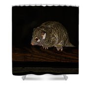 Possum Shower Curtain