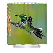 Purple-bibbed Whitetip Hummingbird Shower Curtain