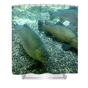 Rainbow Trout Shower Curtain by Les Cunliffe