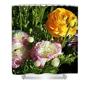 Ranunculus 1 Shower Curtain