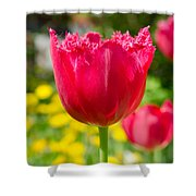 Red Tulips On The Green Background Shower Curtain