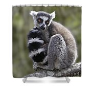 Ring-tailed Lemur Shower Curtain