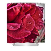 Red Rose And Summer Rain Shower Curtain