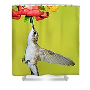 Ruby-throated Hummingbird Female Shower Curtain