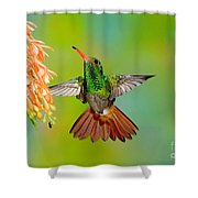 Rufous-tailed Hummingbird Shower Curtain