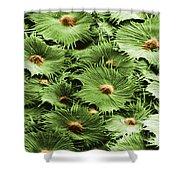 Russian Silverberry Leaf Sem Shower Curtain