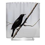 Rusty Blackbird Shower Curtain