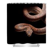 Savu Python On Tree Branch Shower Curtain