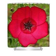 Scarlet Flax Shower Curtain