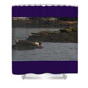 Seals Series 2  Shower Curtain