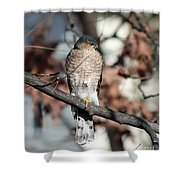 Sharp-shinned Hawk 2 Shower Curtain