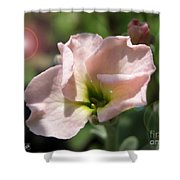 Single Peach Stocks From The Vintage Mix Shower Curtain
