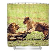 Small Lion Cubs Playing. Tanzania Shower Curtain