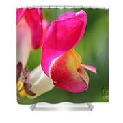 Snapdragon Named Floral Showers Red And Yellow Bicolour Shower Curtain