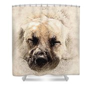 Snooze Shower Curtain