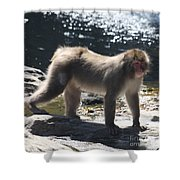 Snow Monkey Shower Curtain