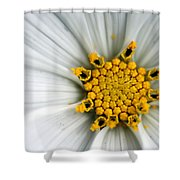Sonata Cosmos White Shower Curtain