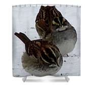 3 Sparrows Shower Curtain