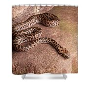 Spotted Python Antaresia Maculosa Shower Curtain