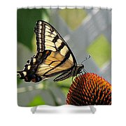 Swallowtail On Coneflower Shower Curtain