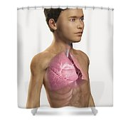 The Lungs Within The Body Pre-adolescent Shower Curtain