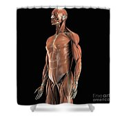 The Muscles Of The Upper Body Shower Curtain